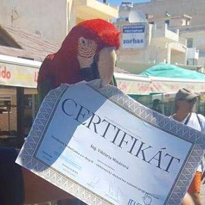 Budú papagáje žrať Vaše certifikáty aj toto leto?