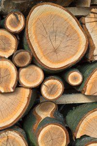 foto zadarmo - rozpílené drevo