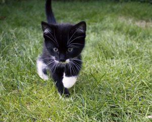obrázok na pracovnej ploche - mačiatko