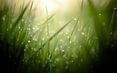 obrázok na pracovnej ploche - kvapky rosy na steblách trávy