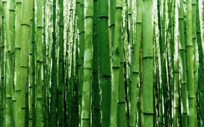 obrázok plochy pre win - bambusy
