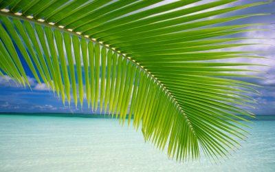 obrázok plochy pre win vista - palma
