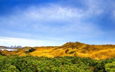 obrázok plochy pre win vista - savana