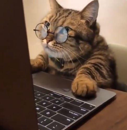 Ako vyzerať na internete dobre. Vďaka mačkám.